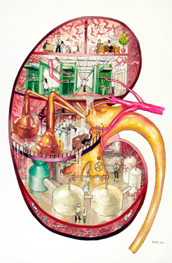 KidneyFactoryA
